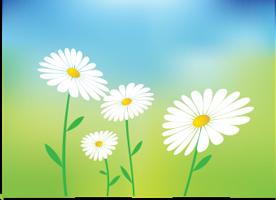 eliminare-le-zanzare-insetticida-naturale-per-giardino-e-casa-nebulizzatore-insetticida-piretro