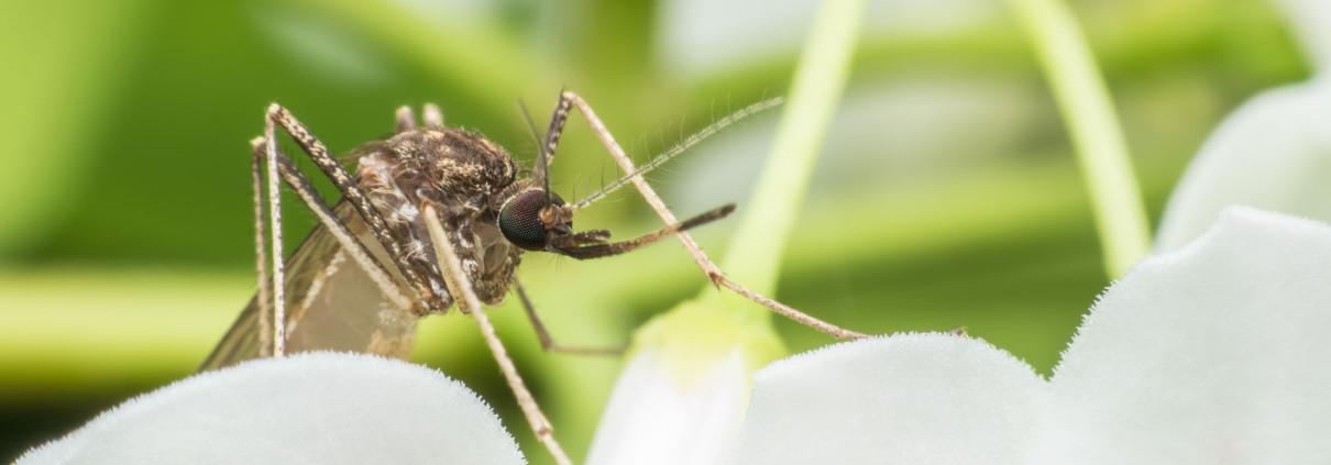 Elimina le zanzare la soluzione contro le zanzare tigre e - Lotta alle talpe in giardino ...